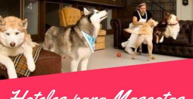 Hotel para perros montevideo