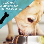Que comen los perros