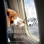 cuanto cuesta llevar a tu perro en avion