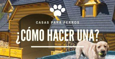 casas para perros economicas