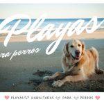 playas habilitadas para perros