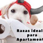 ranking de perros para departamentos